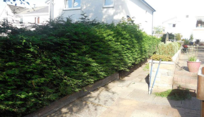 glasgow_garden_hedge_cut